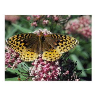 Great Spangled Fritillary Butterfly Postcard