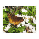 Great Spangled Fritillary on Mountain Laurel Photo Canvas Print