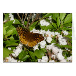 Great Spangled Fritillary on Mountain Laurel Photo Card