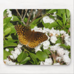 Great Spangled Fritillary on Mountain Laurel Photo Mouse Pad