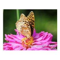 Great Spangled Fritillary Postcard