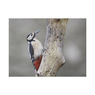 Great Spotted woodpecker canvas print
