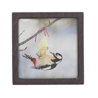 Great Spotted Woodpecker (Dendrocopos major), Gift Box