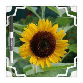 Great Sunflower Dry Erase Whiteboards