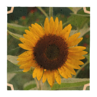 Great Sunflower Coasters