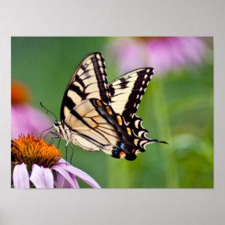 Great Swallowtail Print
