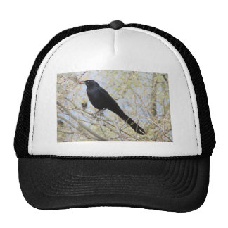Great-tailed Grackle Hat