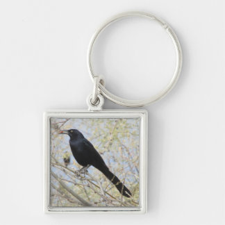 Great-tailed Grackle Keychain