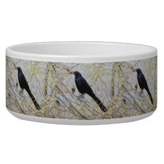 Great-tailed Grackle Pet Food Bowls