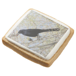 Great-tailed Grackle Square Shortbread Cookie
