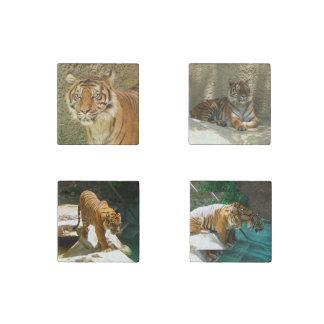 Great Tiger Stone Magnet Set!