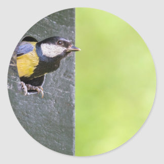 Great tit parent in hole of nest box classic round sticker