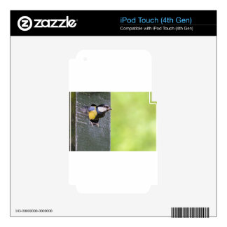 Great tit parent in hole of nest box decal for iPod touch 4G