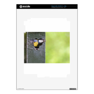 Great tit parent in hole of nest box decals for the iPad 2