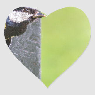 Great tit parent in hole of nest box heart sticker