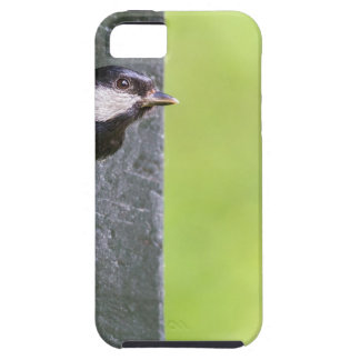 Great tit parent in hole of nest box iPhone SE/5/5s case