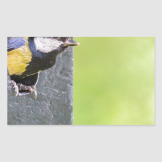Great tit parent in hole of nest box rectangular sticker