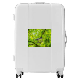 Great tit, parus major luggage