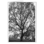 Great  Tree Greeting Cards