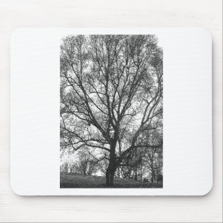 Great  Tree Mouse Pad