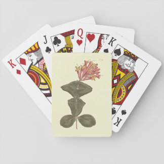 Great Trumpet Honeysuckle Botanical Illustration Playing Cards