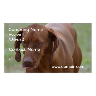 Great Vizsla Dog Business Card
