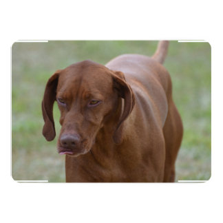 Great Vizsla Dog Card