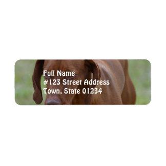Great Vizsla Dog Label