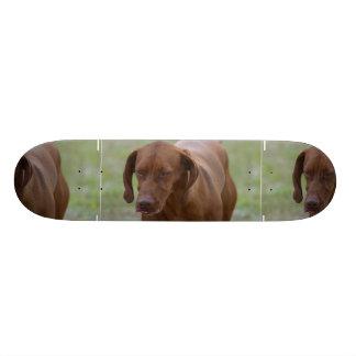 Great Vizsla Dog Skateboard