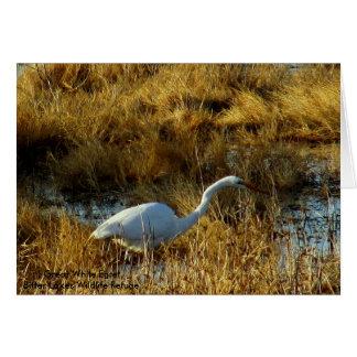 Great White Egret Bitter Lakes Wildlife Refuge... Card