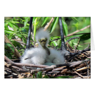 Great White Egret Chick In Nest Greeting Card