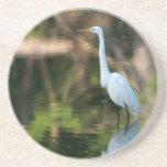Great White Egret Coasters