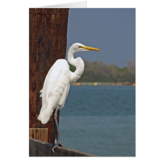 Great White Egret Colour (Blank Card) Card