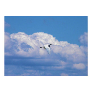 Great white egret flying in the beautiful sky poster