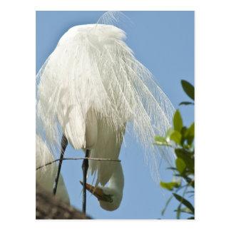 Great White Heron Bottoms Up Postcard