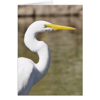 Great White Heron Card