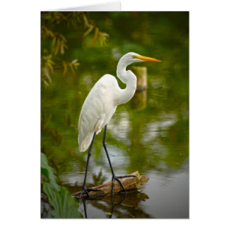 Great White Heron on a Log Photograph Card