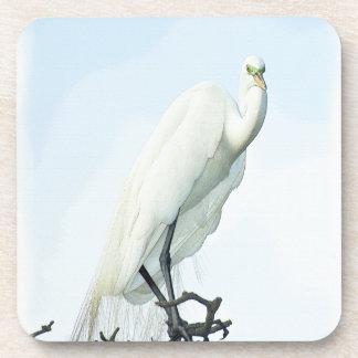 Great White Heron Portrait Beverage Coasters