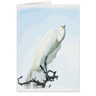 Great White Heron Portrait Card