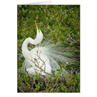 Great White Heron Pose Photograph Card