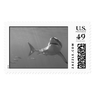 Great White Postage Stamps