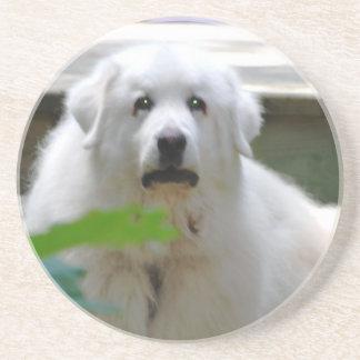 Great White Pyrenees Dog Coaster