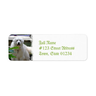 Great White Pyrenees Dog Return Address Labels