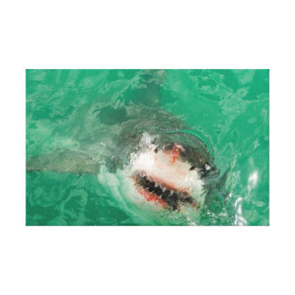 Great White Shark1 Canvas Print