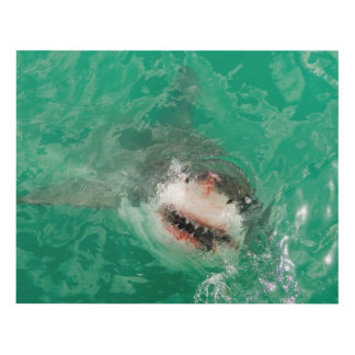 Great White Shark1 Panel Wall Art