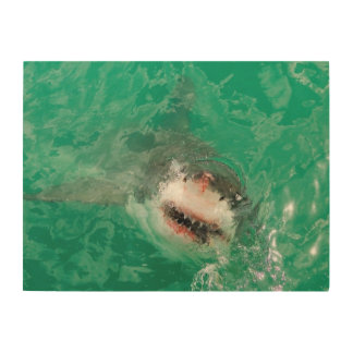 Great White Shark1 Wood Wall Art
