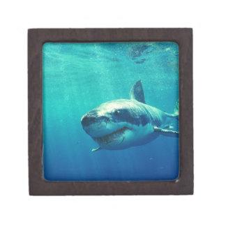 GREAT WHITE SHARK 1 JEWELRY BOX