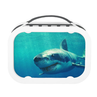 GREAT WHITE SHARK 1 REPLACEMENT PLATE
