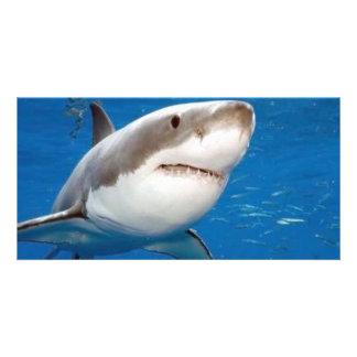 Great White Shark Card