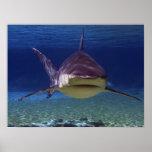 Great White Shark Encounter Poster